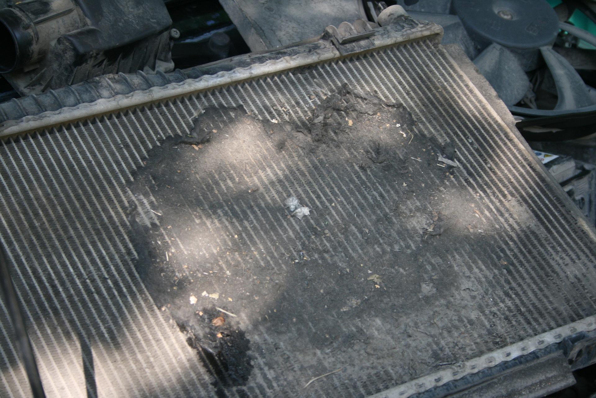 Фото загрязненного радиатора автомобиля