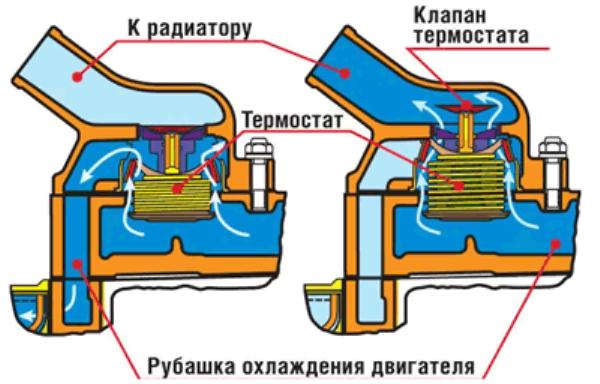 Малый и большой круг циркуляции ОЖ через термостат